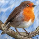 Robin by IssybelleLang