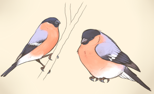 Bullfinches by Whippe