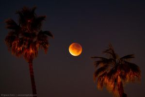 Eclipse by isotophoto