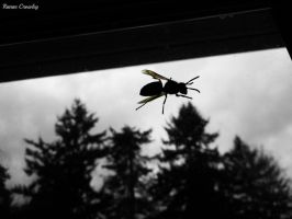 Trapped wasp by Ranae490