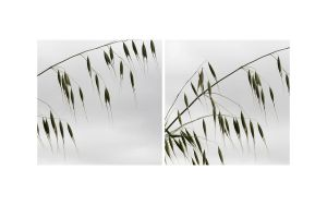Grass and grey sky by MissUmlaut
