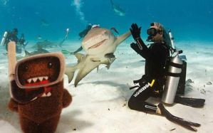 Domo photo bombing a shark 'High Five' by bluedogsd