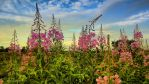 Flowers against the sky by Peenbuiker