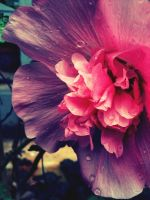apocalypticflower by iphonephotog