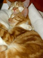 Cat naps by Buble
