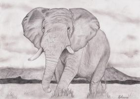 Elephant by Martin-Luure