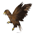 Eagle by death-note-intheDNA