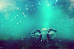 Sea elephant by muuniz