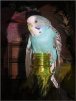 Budgie on a bottle by Andicous