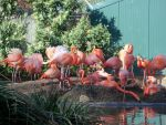 Flamingos by LittleNinja9185