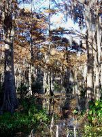 Fall at the Swamp 3 by DevilWillPay10