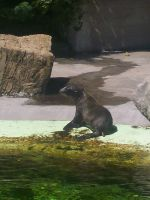 Sea lion by VegasbrideStock
