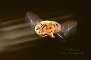Evening Hover by GJ-Vernon
