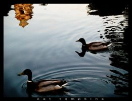 float on by CatherineAllison