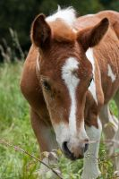 Baby Horse by Tom-Mosack