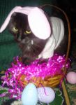 Easter Kitty Dressup by Rainbow826