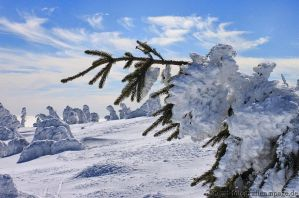 snow trees 4 by MT-Photografien