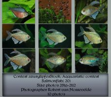 Contest Fish pack 20 by AzurylipfesStock