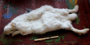 Pelts and More For Sale! by lupagreenwolf