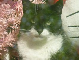 My Cat in the IWndow by LW-Lucy
