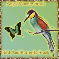 Bird and Butterfly Stock by AngelMoon17