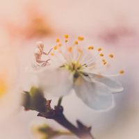 Efflorescence. by gloeckchen