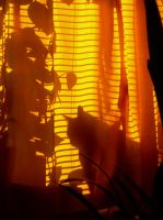 Behind the Golden Curtain by Creativeness