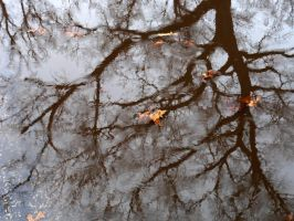 Spring Reflections by fotomademoiselle