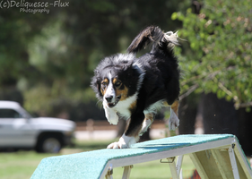 Hollywood Obedience Agility Trial 2 by Deliquesce-Flux