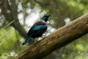 Tui - 4558 by Christina-Phillips