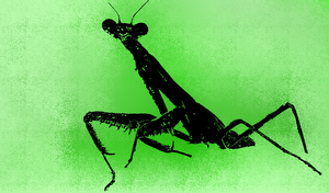 Praying Mantis Background by Ultralee0