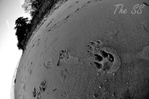 Footprint by SSPictures