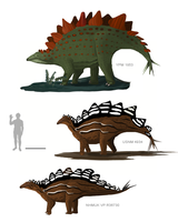 Stegosaurus Comparison by MattMart