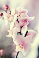 Blossoms by Lady-Tori