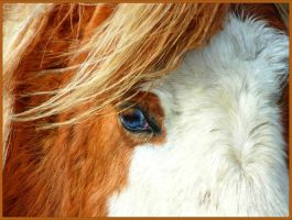 Pony eye by Wulfi