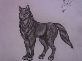 wolf by Sandra-Cooper
