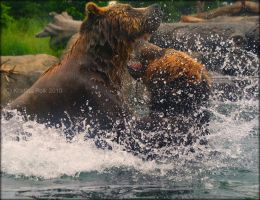 Bearfight I by verybluebird