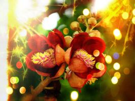 Firework Blooming by Tornmenta