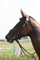 3-day-eventing in Russia 1 by tk11de