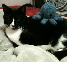 Octopus Cat by tape-artist