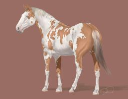 Painted Stallion by August-ana