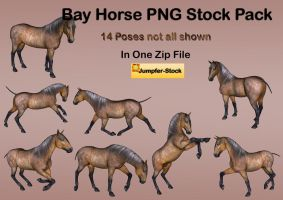 Bay Horse PNG Stock Pack by Roys-Art