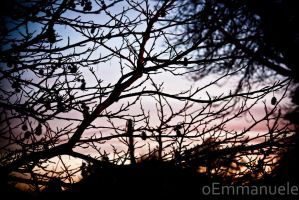 Sunset through the trees - Day 48 - 17/02/13. by oEmmanuele