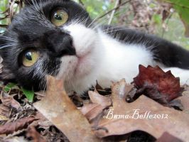 Tarbaby by BamaBelle2012