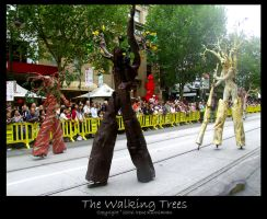 The Walking Trees by cionia