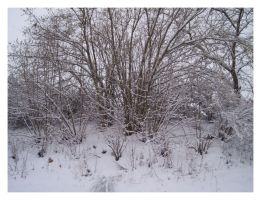Snow and Twigs by Ketrilla