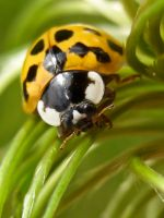 Ladybird 4 by iriscup