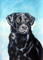 Black labrador by devonhants