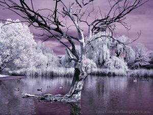 Infrared Pond V by La-Vita-a-Bella