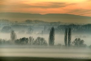 Misty Evening II by Desintegrator